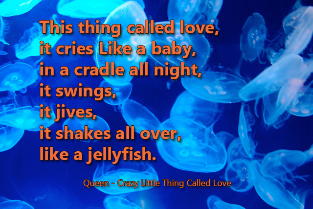 This thing called love It cries Like a baby In a cradle all night It swings It jives It shakes all over like a jelly fish,